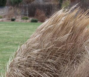 grasses-cold-day