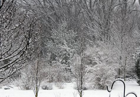 Woodland in snowstorm