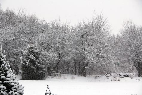 Winter Storm Jan 29, 2012